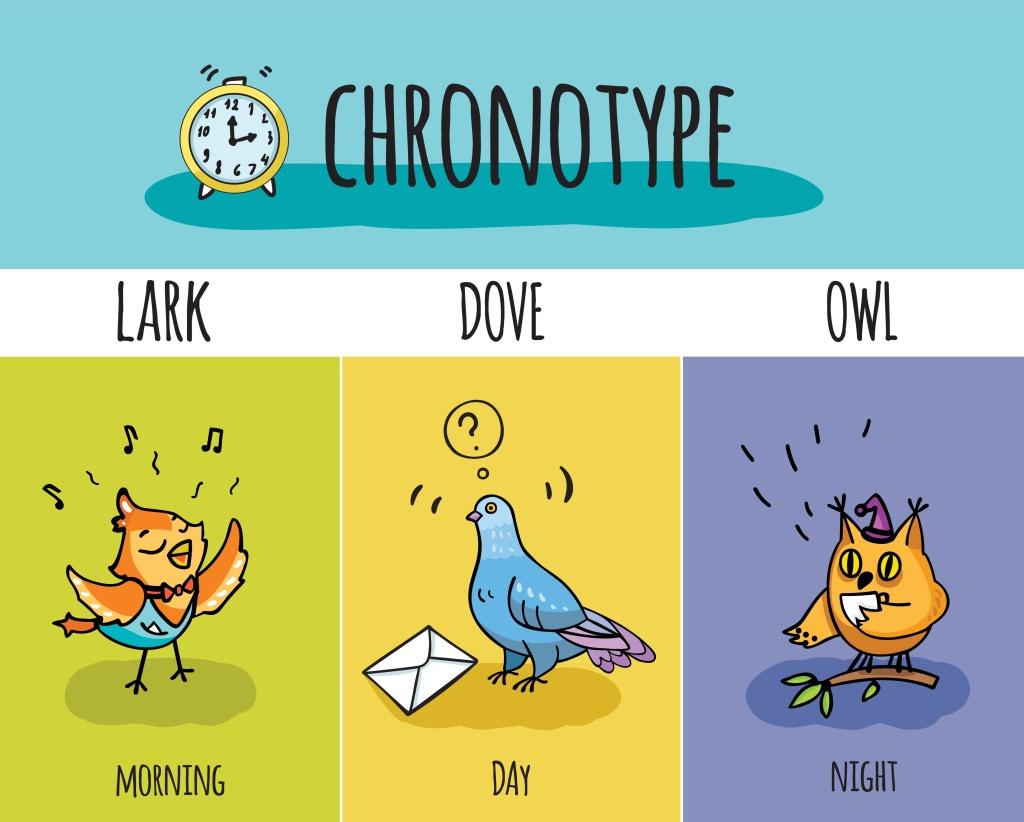 Die Chrontypen in einer Übersicht: Eule, Lerche und Taube
